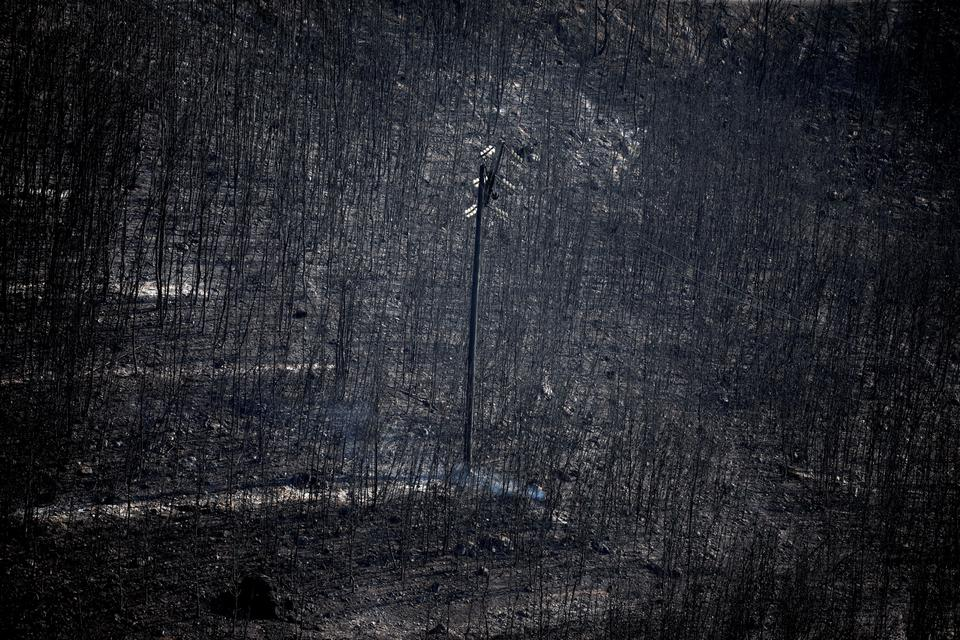 An electricity pole stands among burnt trees following a wildfire in Neos Voutzas, near Athens, Greece, July 25, 2018.