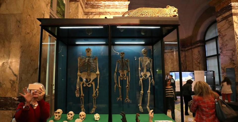 Skeletons are seen in Belgium's Africa Museum, in Tervuren, Belgium.