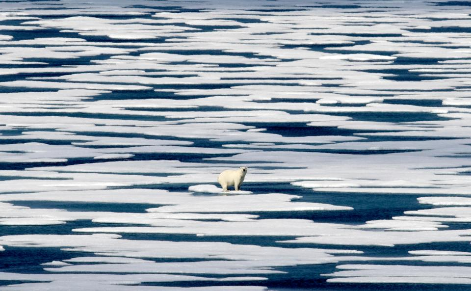 The greening and browning of the tundra has affected the food chain: many Arctic species, from zooplankton to polar bears rely on the areas near ice sheets as feeding grounds.